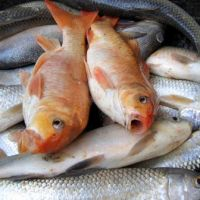 New EWG Seafood Guide - Know If There Are Toxins In Fish