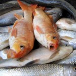New EWG Seafood Guide – Know If There Are Toxins In Fish